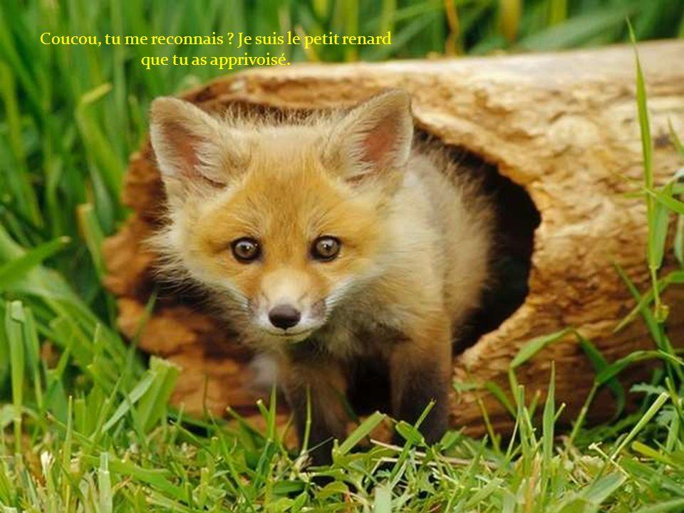 Coucou, tu me reconnais Je suis le petit renard que tu as apprivoisé.