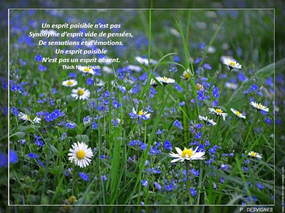Un esprit paisible n'est pas Synonyme d'esprit vide de pensées,