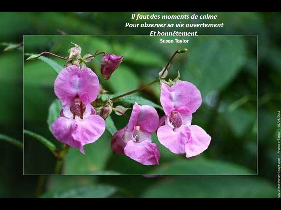 Il faut des moments de calme Pour observer sa vie ouvertement