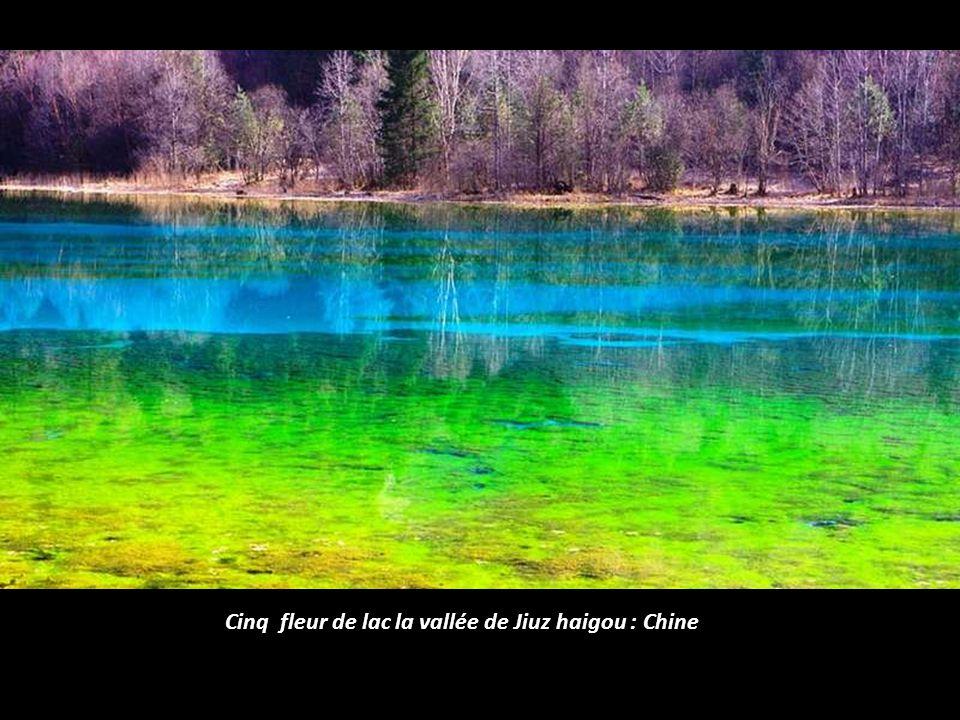 Cinq fleur de lac la vallée de Jiuz haigou : Chine