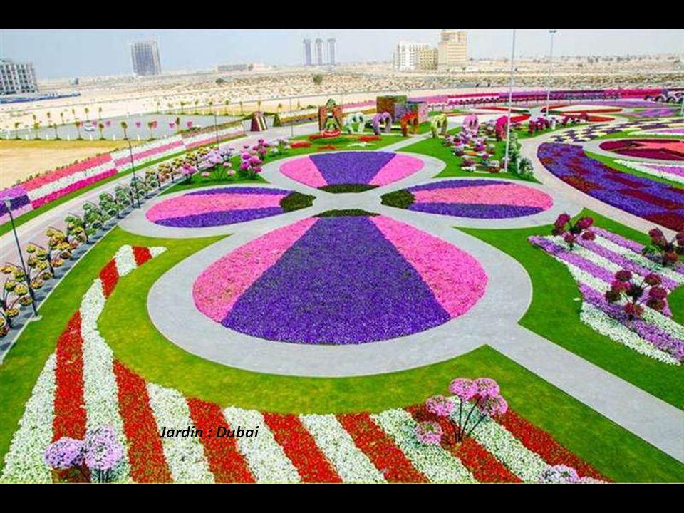 Jardin : Dubai