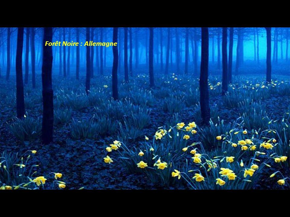 Forêt Noire : Allemagne