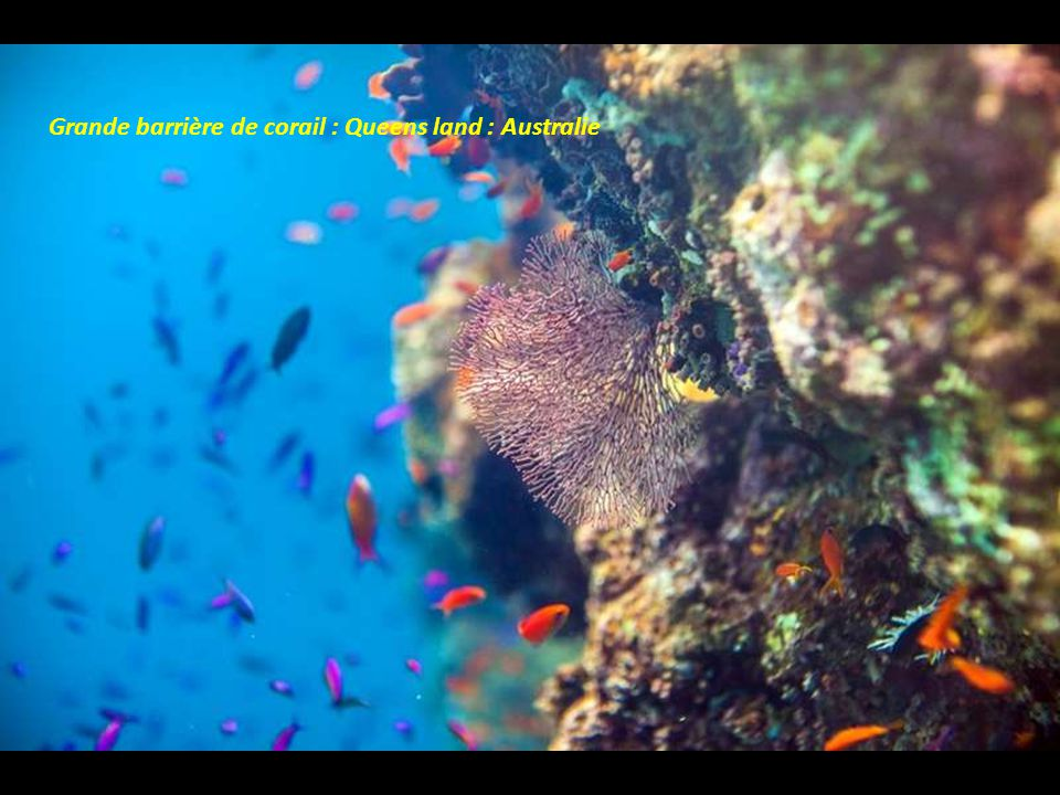 Grande barrière de corail : Queens land : Australie