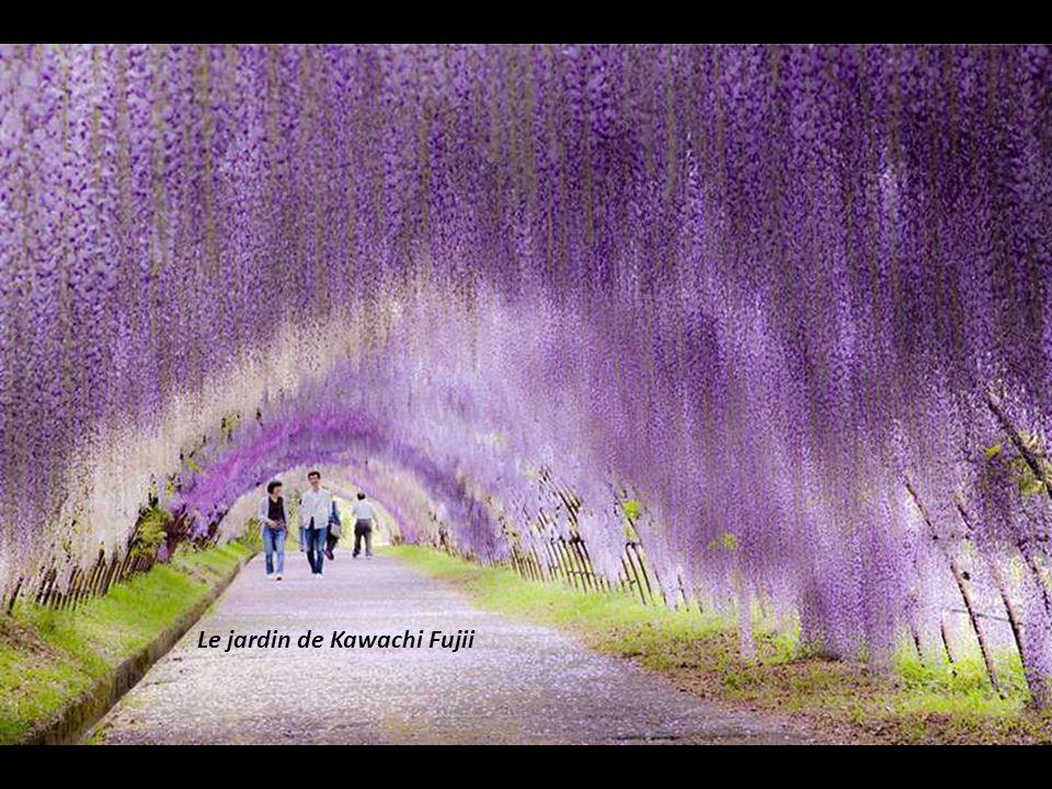 Le jardin de Kawachi Fujii