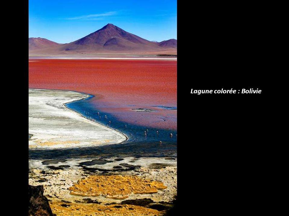 Lagune colorée : Bolivie