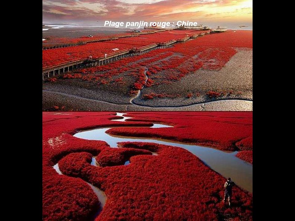 Plage panjin rouge : Chine