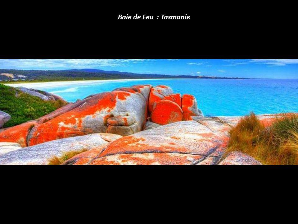 Baie de Feu : Tasmanie