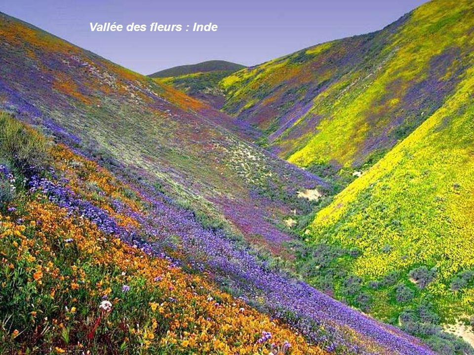 Vallée des fleurs : Inde