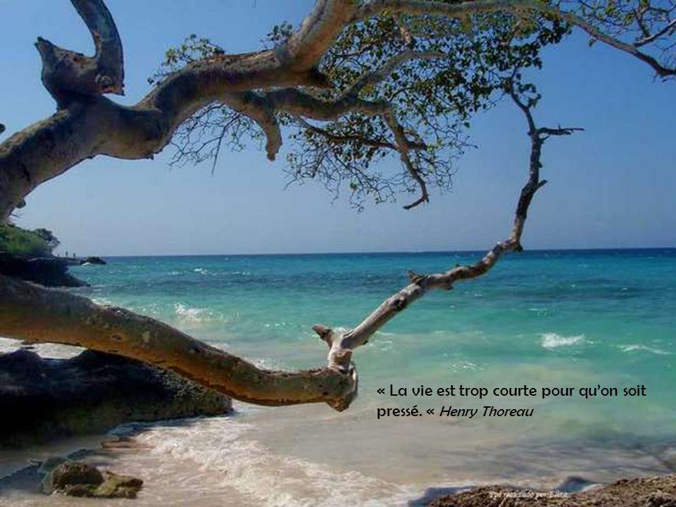 « La vie est trop courte pour qu'on soit pressé. « Henry Thoreau