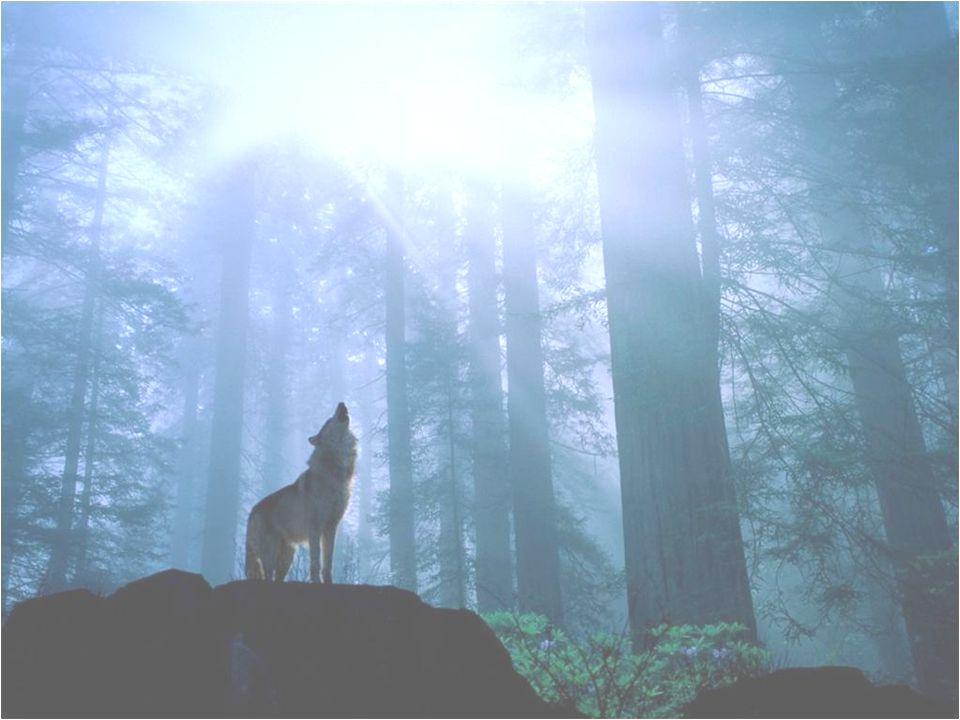 Ne crie pas au loup, car il risque d' arriver