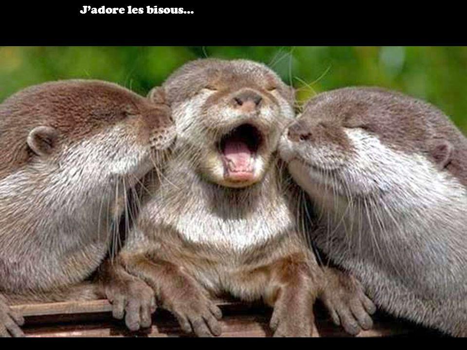 J'adore les bisous…