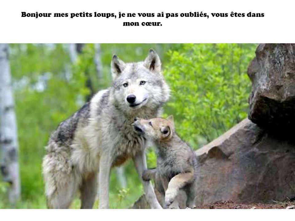 Bonjour mes petits loups, je ne vous ai pas oubliés, vous êtes dans mon cœur.