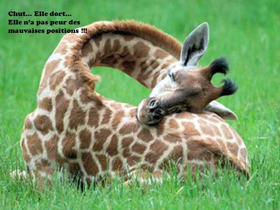 Chut… Elle dort… Elle n'a pas peur des mauvaises positions !!!