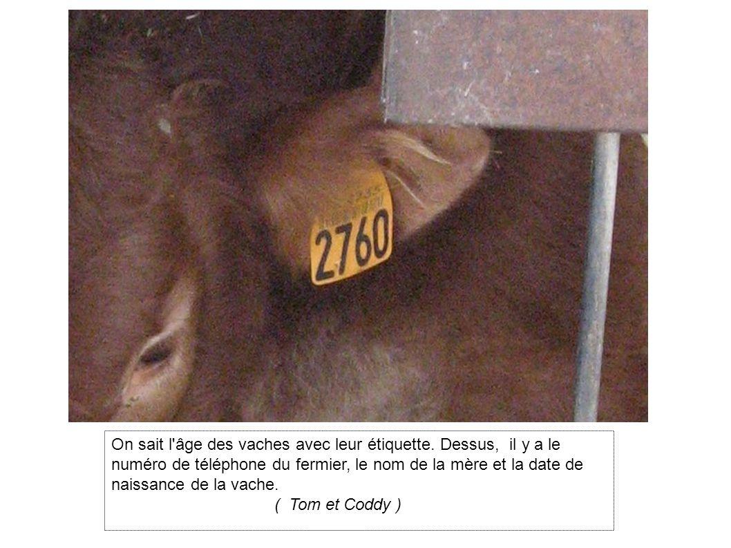 On sait l âge des vaches avec leur étiquette
