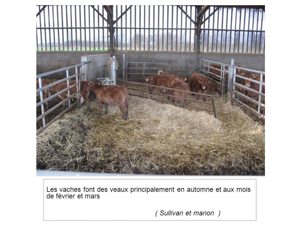 Les vaches font des veaux principalement en automne et aux mois de février et mars
