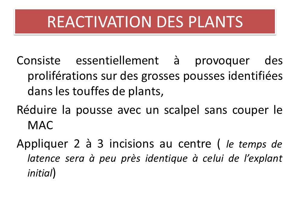 REACTIVATION DES PLANTS