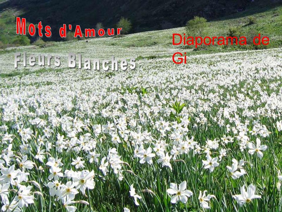 Mots d Amour Diaporama de Gi Fleurs Blanches