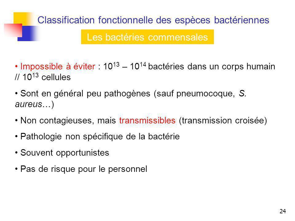 Les bactéries commensales
