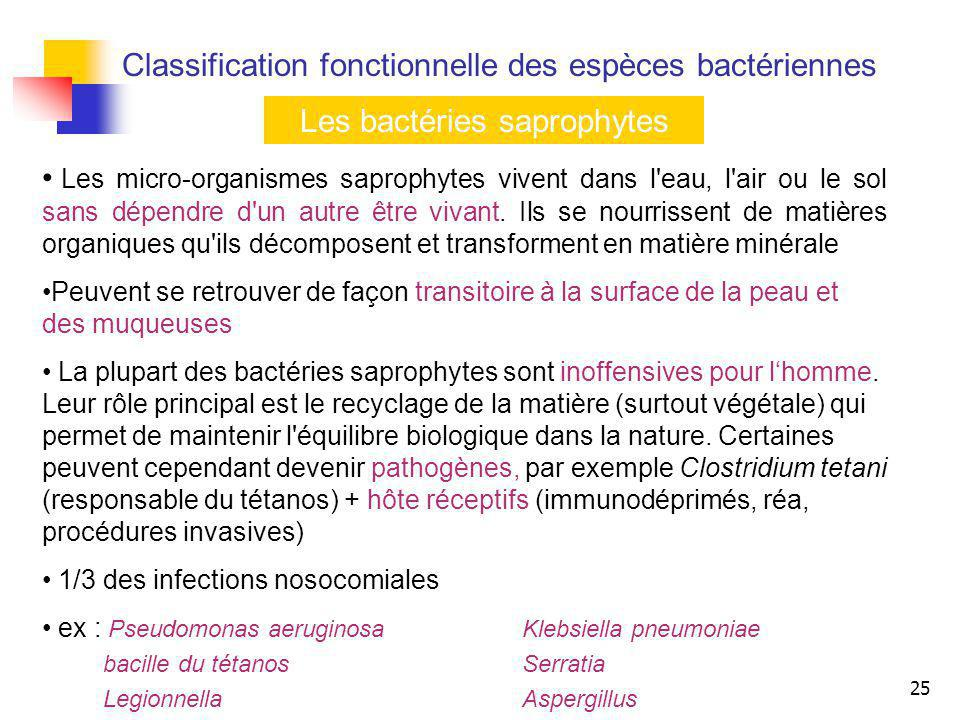 Les bactéries saprophytes