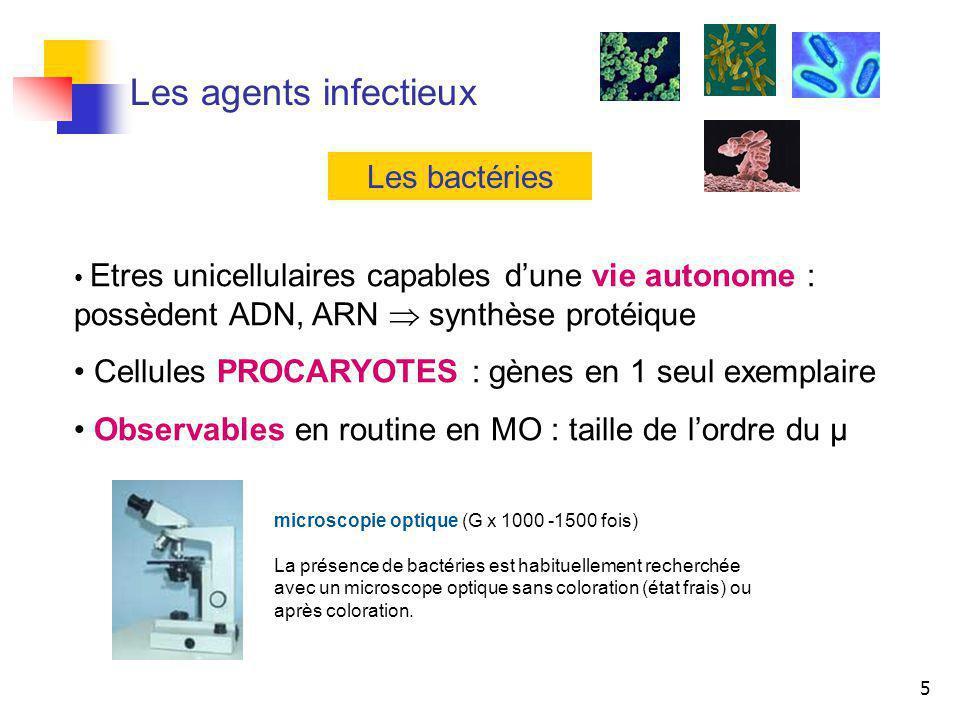 Les agents infectieux Les bactéries