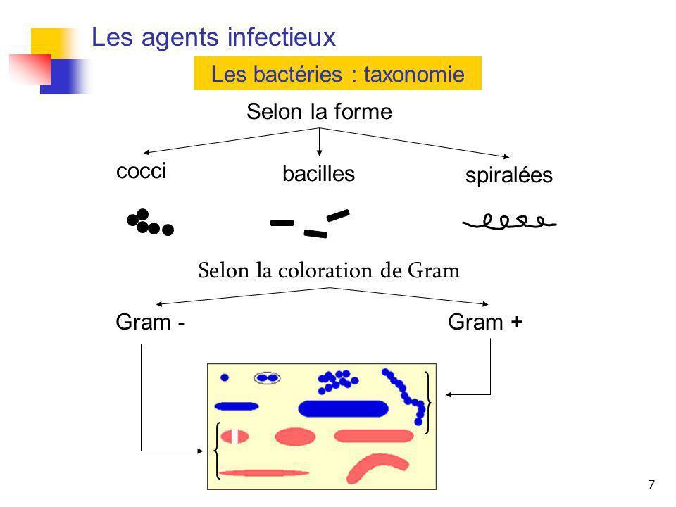 Les agents infectieux Les bactéries : taxonomie Selon la forme cocci