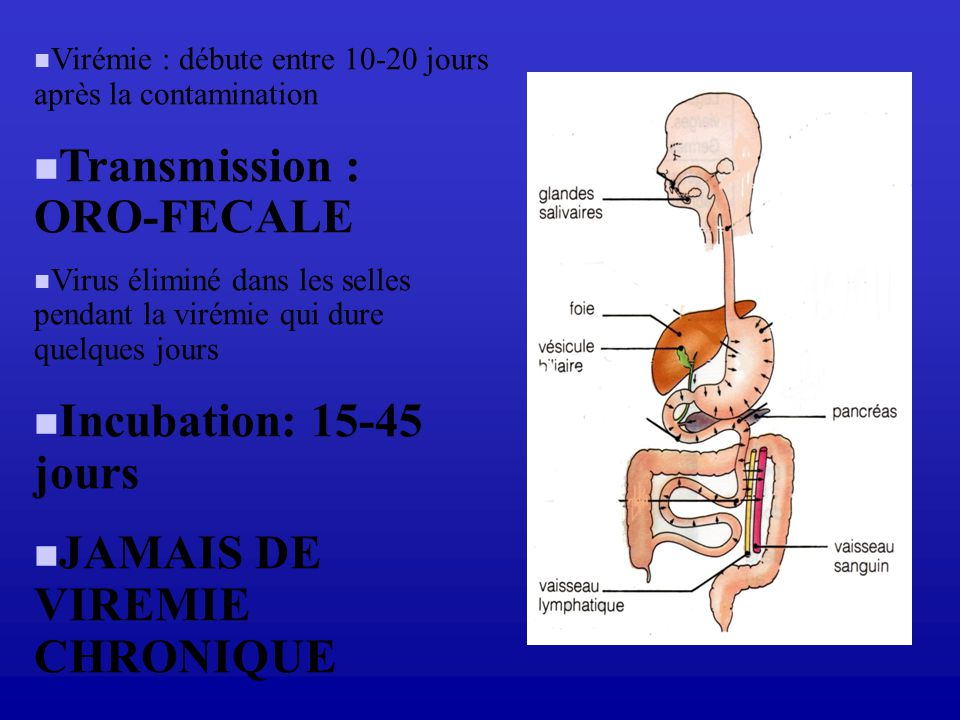 Transmission : ORO-FECALE