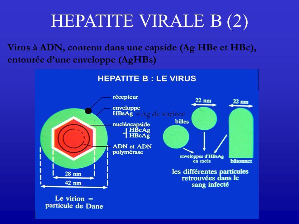 HEPATITE VIRALE B (2) Virus à ADN, contenu dans une capside (Ag HBe et HBc), entourée d'une enveloppe (AgHBs)