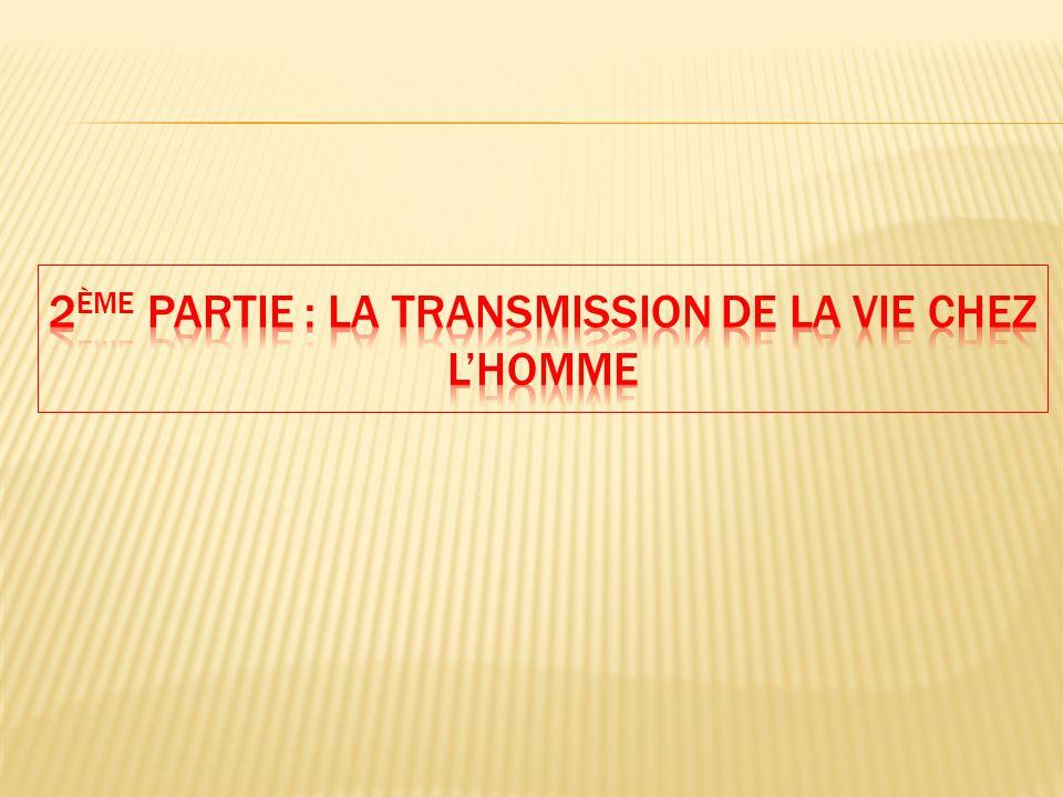 2ème Partie : La transmission de la vie chez l'Homme