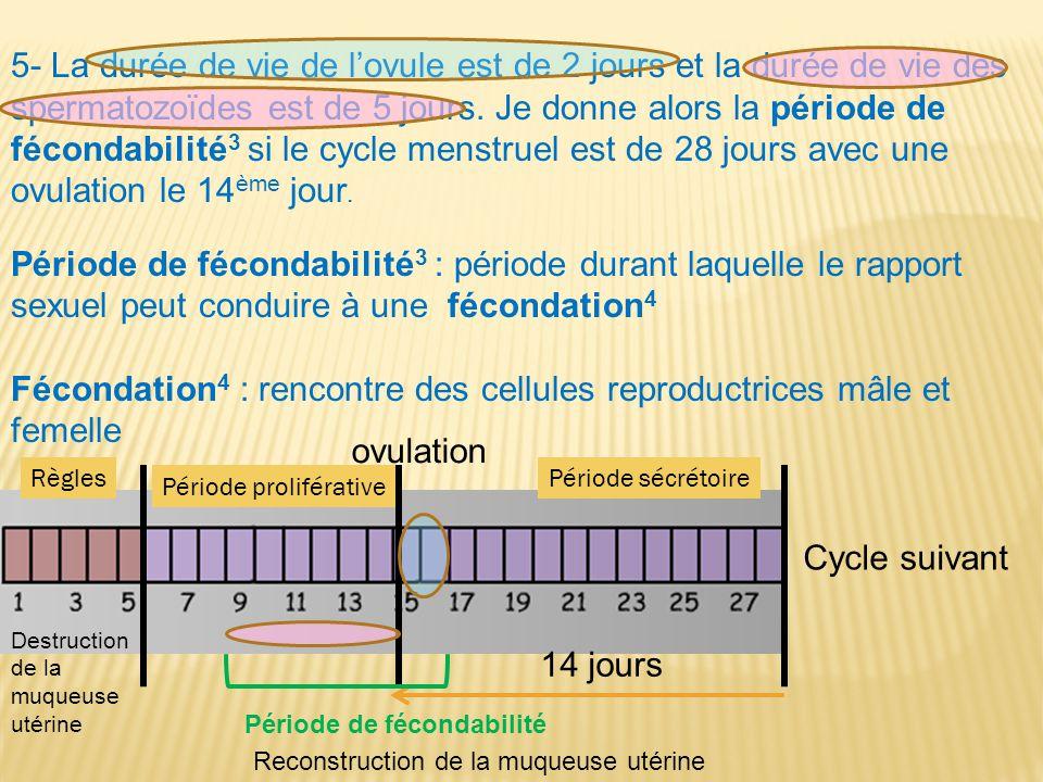 Fécondation4 : rencontre des cellules reproductrices mâle et femelle