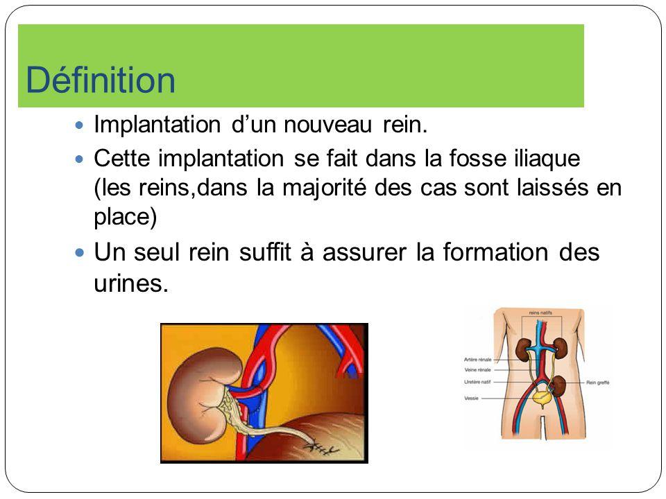 Définition Un seul rein suffit à assurer la formation des urines.