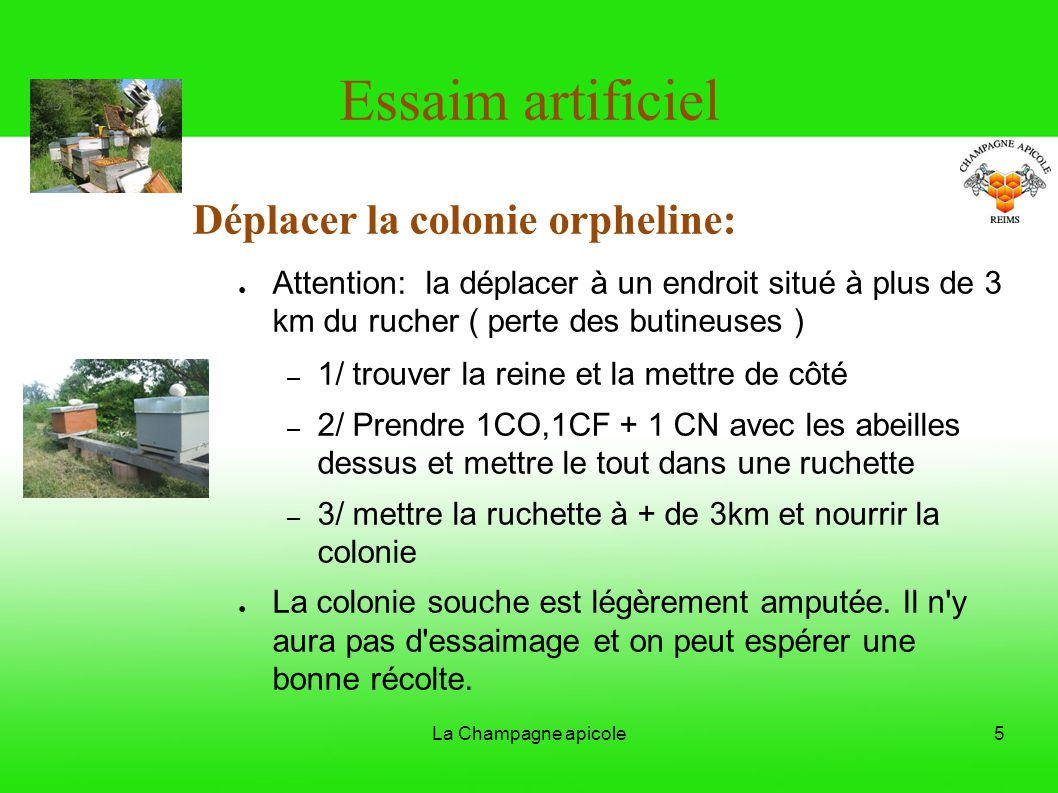 Essaim artificiel Déplacer la colonie orpheline: