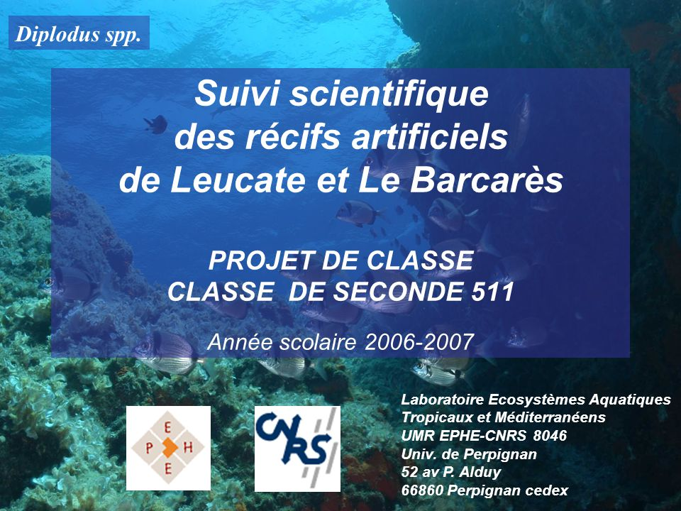 Diplodus spp. Suivi scientifique des récifs artificiels de Leucate et Le Barcarès PROJET DE CLASSE CLASSE DE SECONDE 511 Année scolaire 2006-2007.
