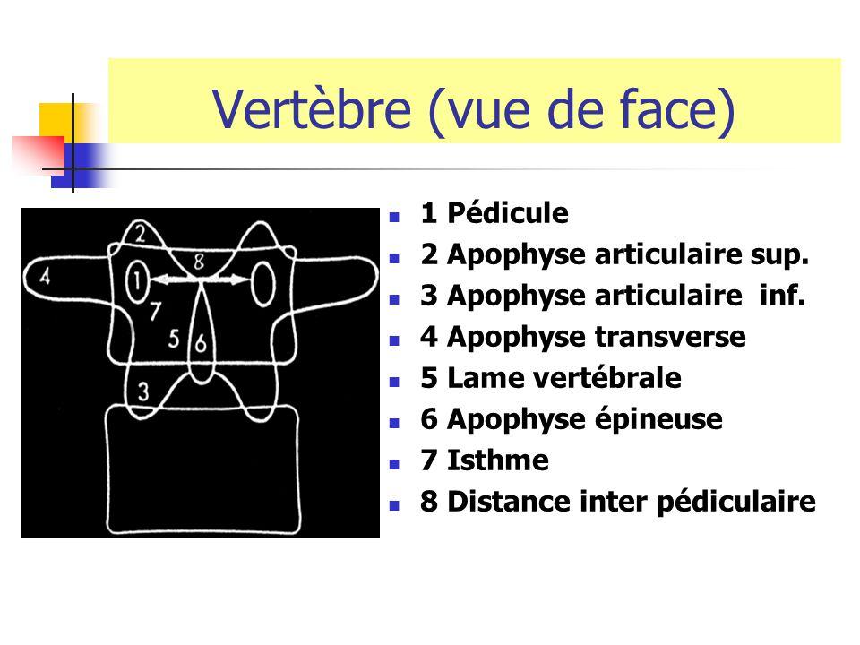 Vertèbre (vue de face) 1 Pédicule 2 Apophyse articulaire sup.