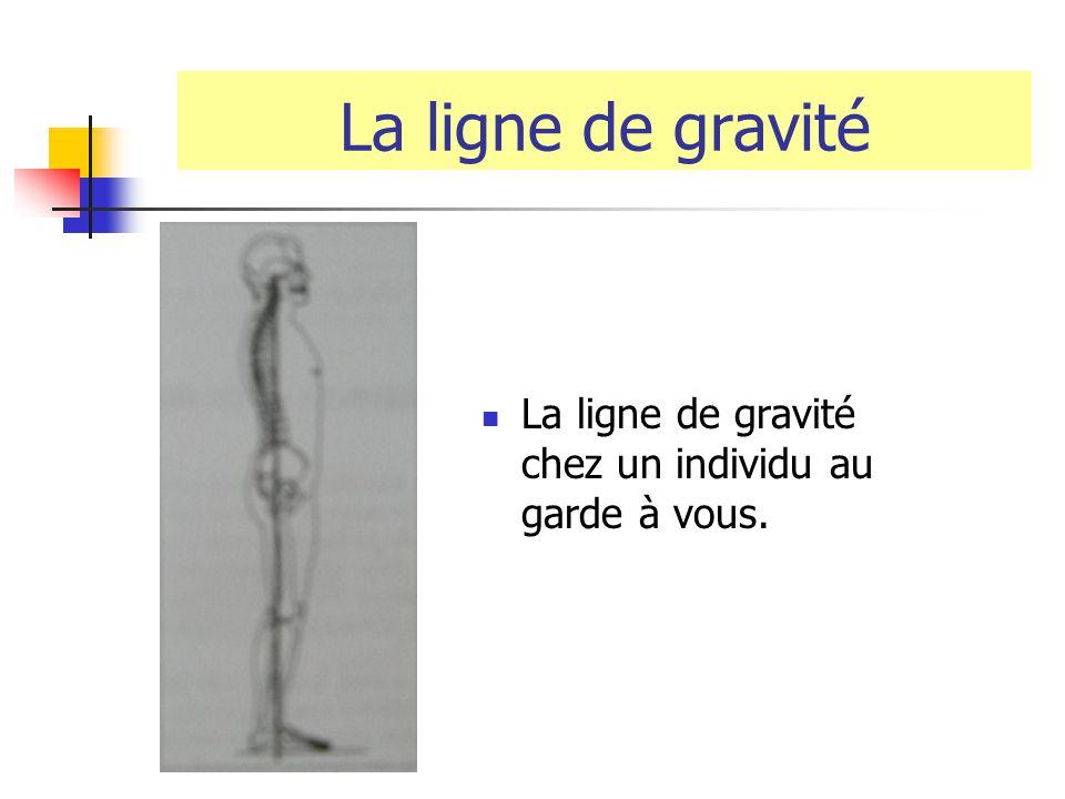 La ligne de gravité La ligne de gravité chez un individu au garde à vous.