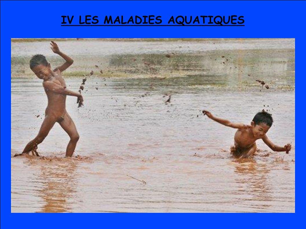 IV LES MALADIES AQUATIQUES