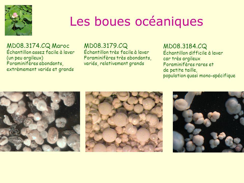 Les boues océaniques MD08.3174.CQ Maroc MD08.3179.CQ MD08.3184.CQ