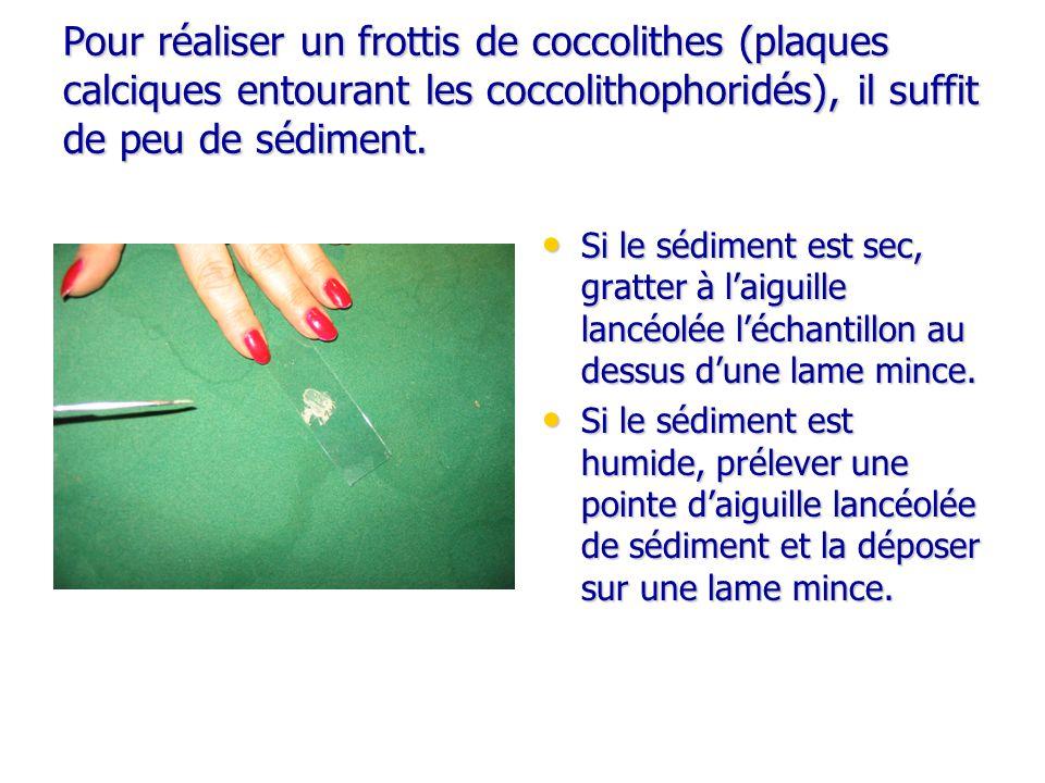Pour réaliser un frottis de coccolithes (plaques calciques entourant les coccolithophoridés), il suffit de peu de sédiment.