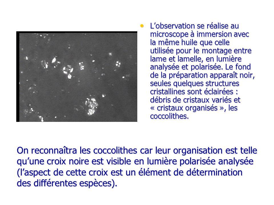 L'observation se réalise au microscope à immersion avec la même huile que celle utilisée pour le montage entre lame et lamelle, en lumière analysée et polarisée. Le fond de la préparation apparaît noir, seules quelques structures cristallines sont éclairées : débris de cristaux variés et « cristaux organisés », les coccolithes.