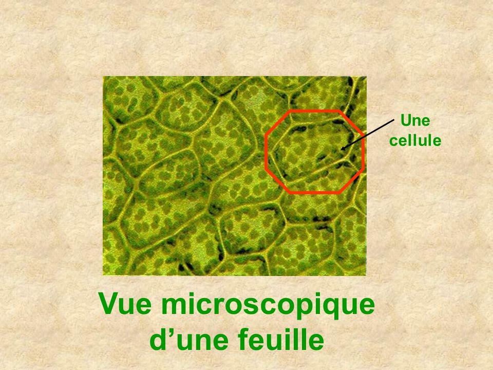 Vue microscopique d'une feuille