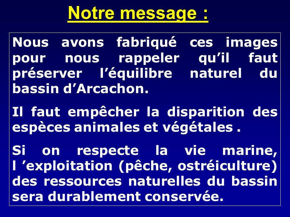 Notre message : Nous avons fabriqué ces images pour nous rappeler qu'il faut préserver l'équilibre naturel du bassin d'Arcachon.