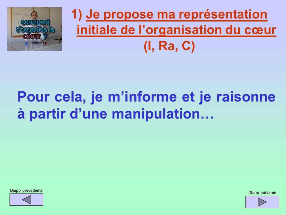 1) Je propose ma représentation initiale de l'organisation du cœur