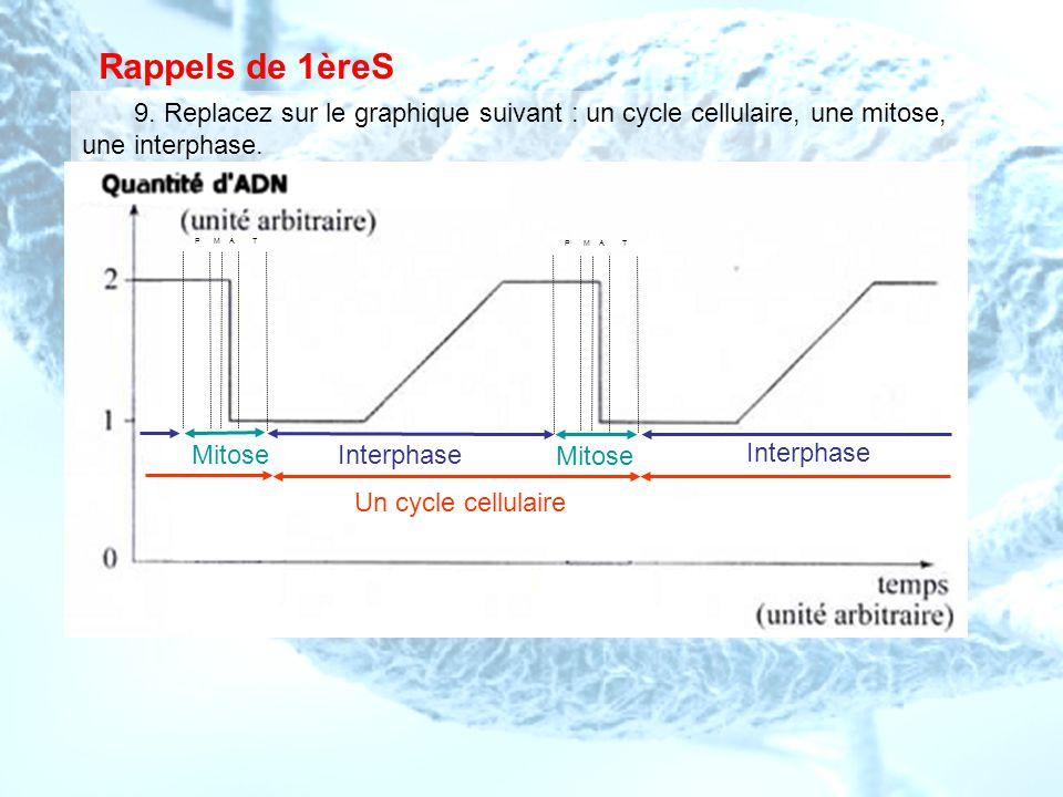 Rappels de 1èreS 9. Replacez sur le graphique suivant : un cycle cellulaire, une mitose, une interphase.