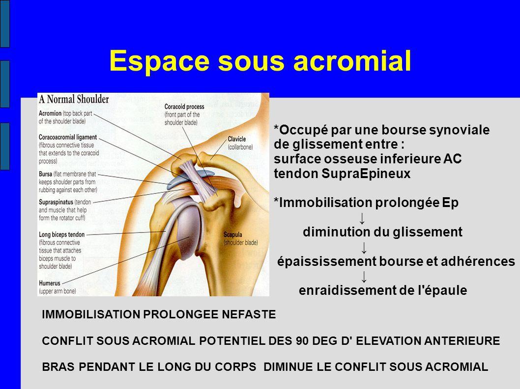 Espace sous acromial *Occupé par une bourse synoviale