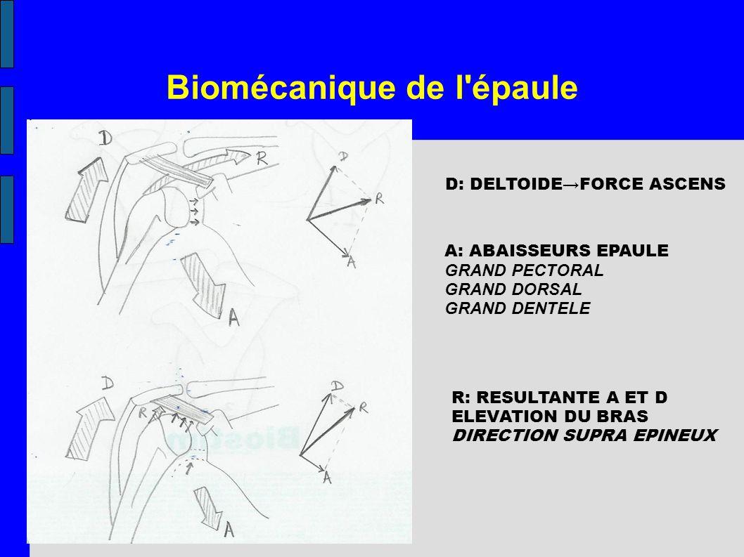Biomécanique de l épaule