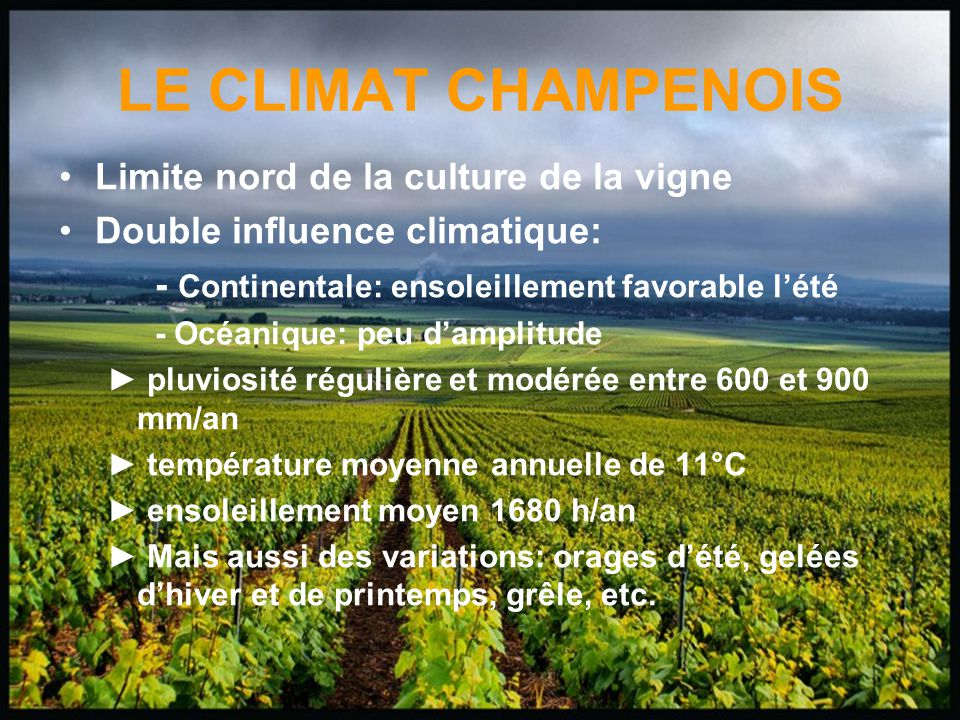 LE CLIMAT CHAMPENOIS Limite nord de la culture de la vigne