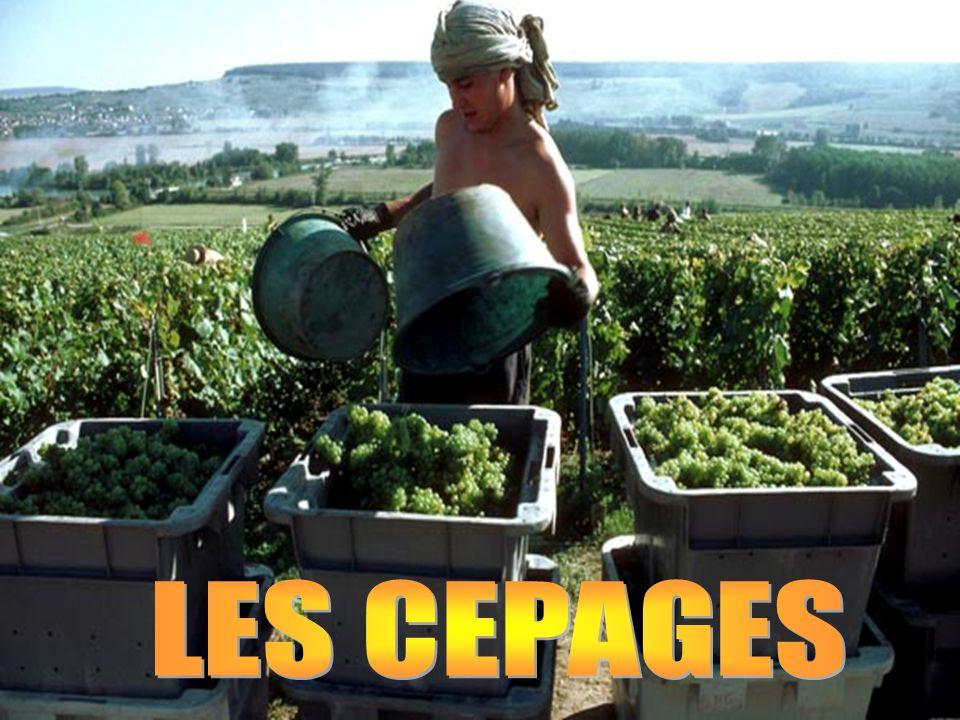 LES CEPAGES