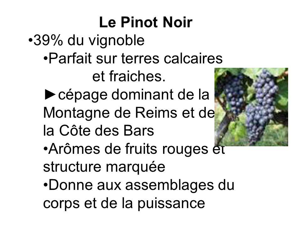 Le Pinot Noir 39% du vignoble. Parfait sur terres calcaires. et fraiches. ►cépage dominant de la Montagne de Reims et de.