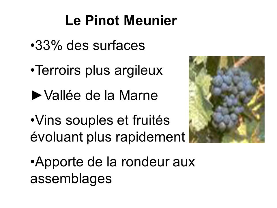 Le Pinot Meunier 33% des surfaces. Terroirs plus argileux. ►Vallée de la Marne. Vins souples et fruités évoluant plus rapidement.