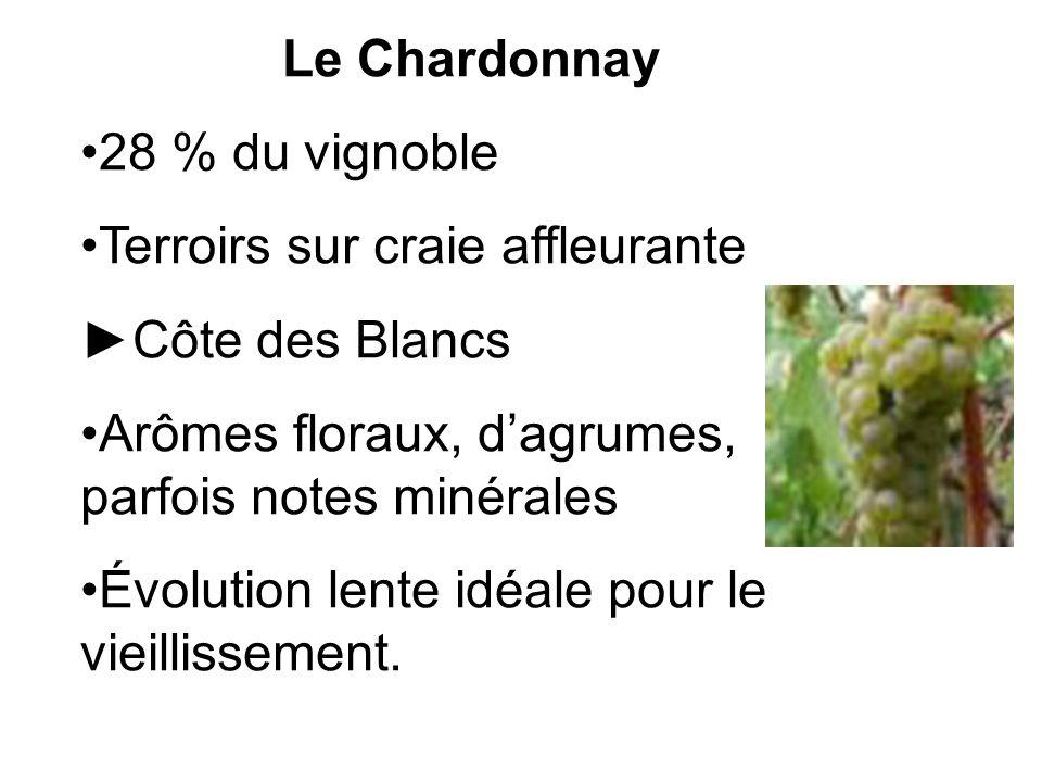 Le Chardonnay 28 % du vignoble. Terroirs sur craie affleurante. ►Côte des Blancs. Arômes floraux, d'agrumes, parfois notes minérales.