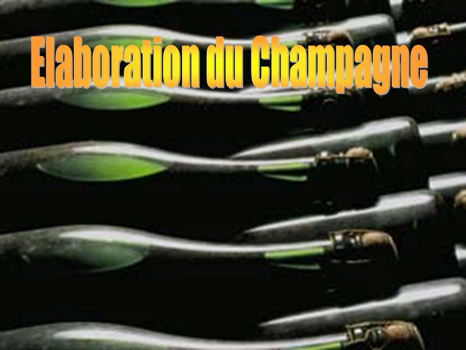 Elaboration du Champagne